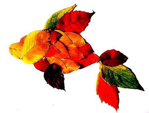 Соберите на прогулке опавшие листья и составьте из них красивый узор или фигурку