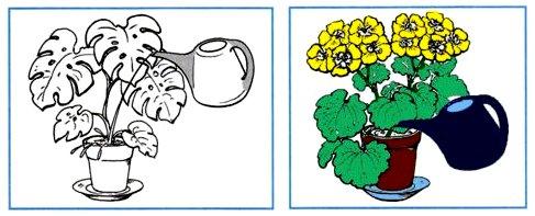 Раскрась рисунок, на котором растение поливают правильно. Объясни свой выбор.