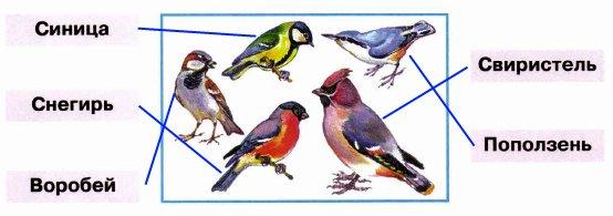 Знаешь ли ты названия этих птиц? Соедини линиями рисунки и названия. Проверь себя по учебнику.