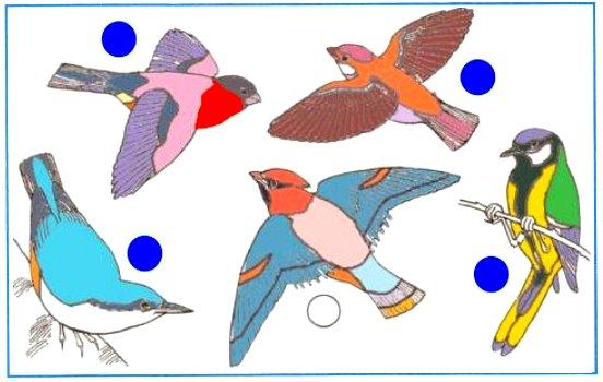 Определи птиц на этом рисунке. Раскрась их. Закрась кружки возле тех птиц, которые тебе доводилось видеть в природе