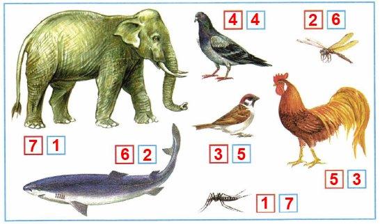 Сравни размеры животных, изображённых на рисунке. В красных квадратиках пронумеруй животных в порядке увеличения размеров. В синих квадратиках пронумеруй в порядке уменьшения размеров