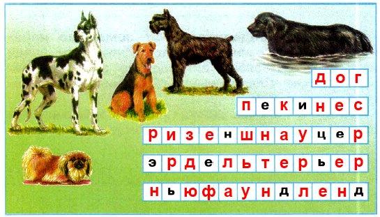 Как называются эти породы собак? Напиши, пользуясь атласом-определителем «От земли до неба»