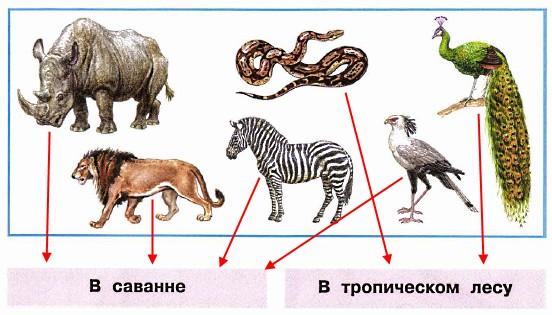 Укажи стрелками, где живут эти животные.