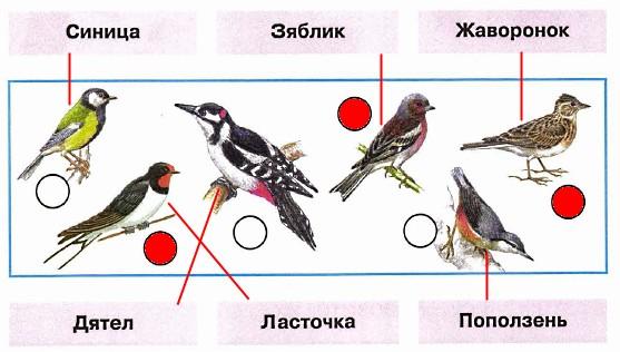 Знаете ли вы этих птиц? Соедините линиями рисунки и названия. Проверьте себя по учебнику или атласу-определителю