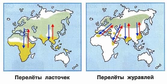 На этих схемах зелёным цветом показаны районы, где ласточки и журавли проводят лето. Жёлтым цветом показаны районы, где они зимуют