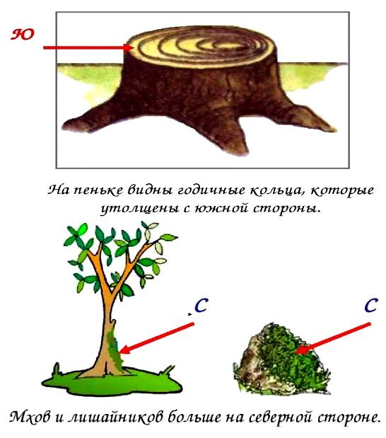 5. Нарисуй, по каким природным признакам можно определить стороны горизонта.