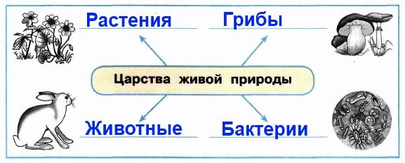 4. По символическим рисункам определи названия царств и впиши их в схему.